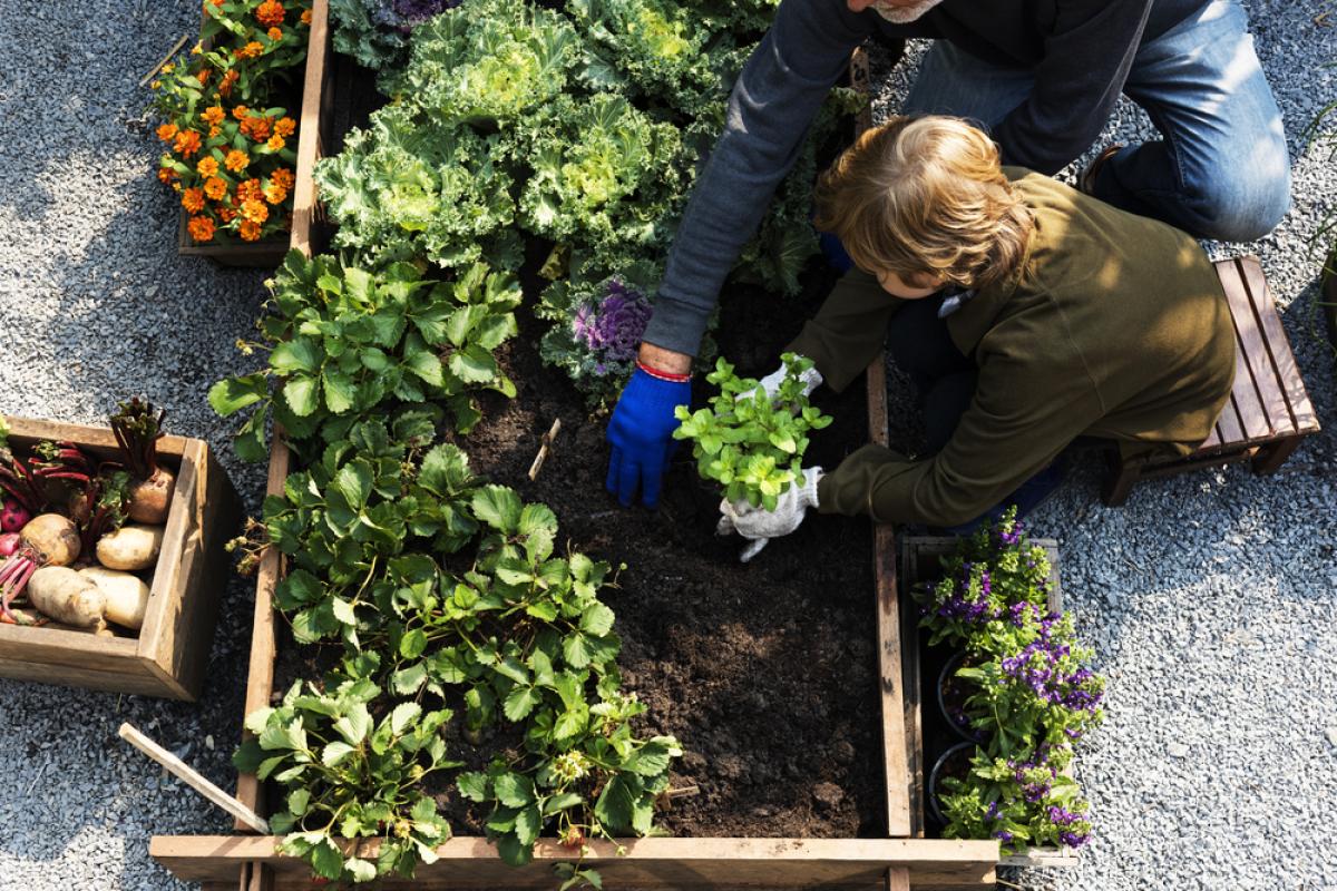 Grands projets urbains Bordeaux – Un enfant récolte les légumes
